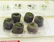 plantcloning-01-180.jpg